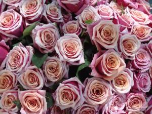 Kirjan ja ruusun päivänä vaihdetaan lahjoja 1